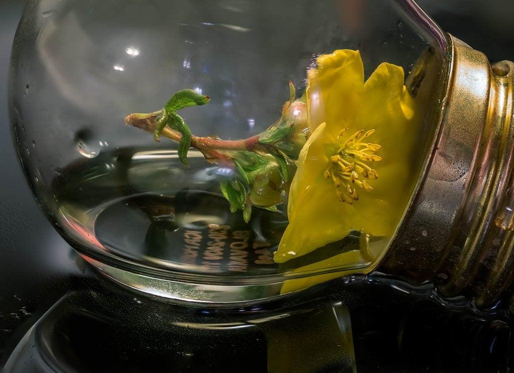 Skarpa makrobilder med focus stacking direkt i kameran - Ludwig Sörmlind