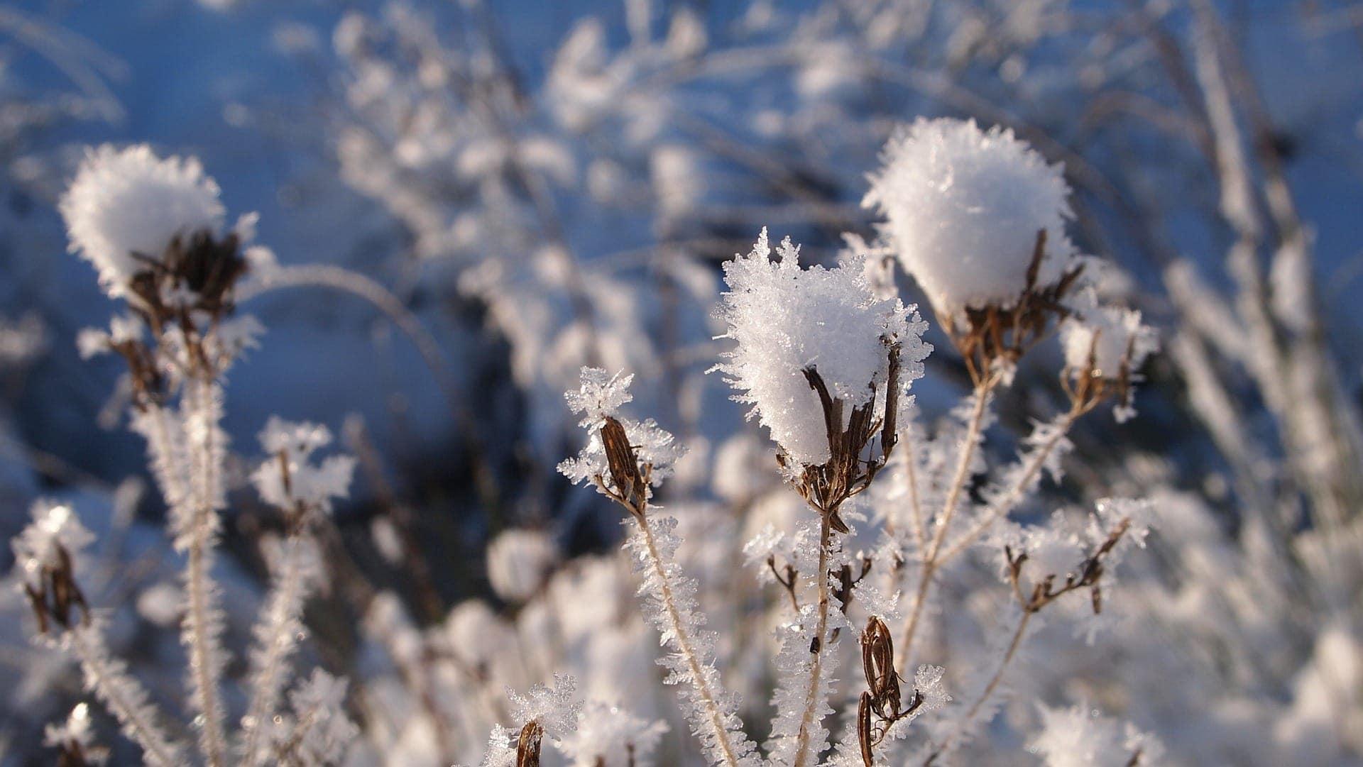 snow-667784_1920