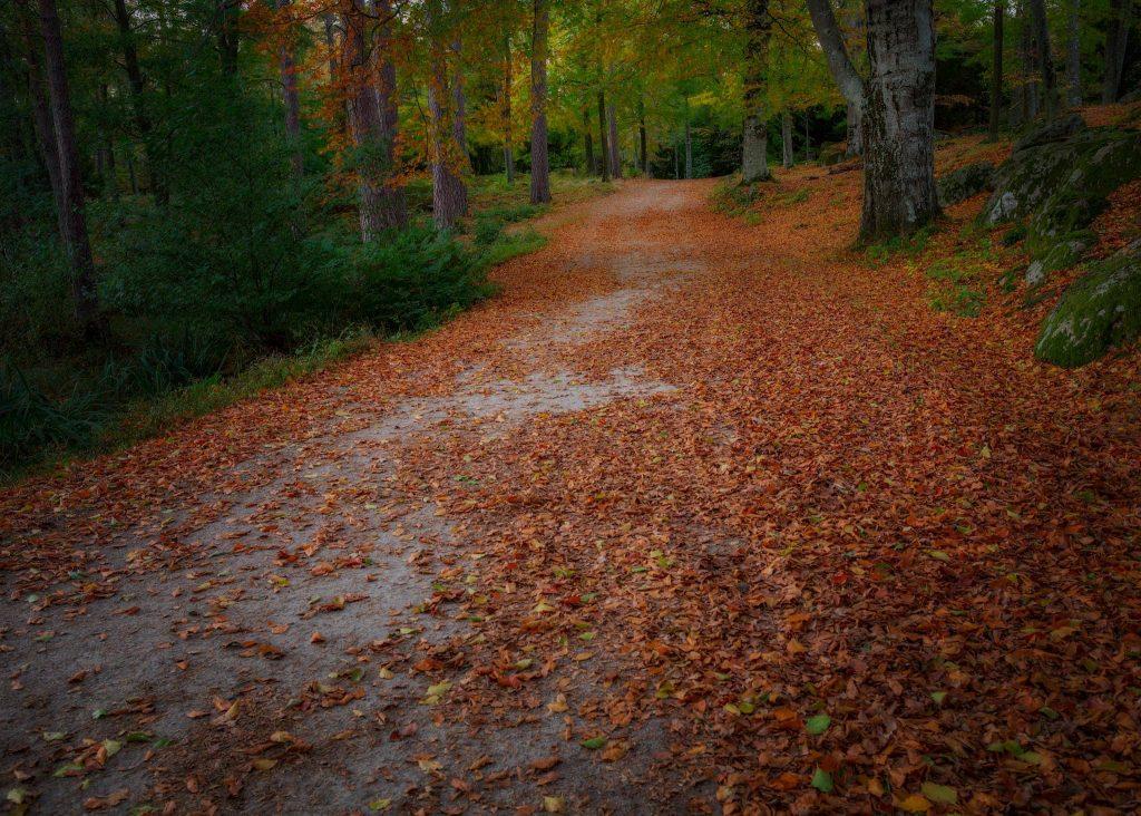 Promenadstråk i Ronneby Brunnspark - Ludwig Sörmlind