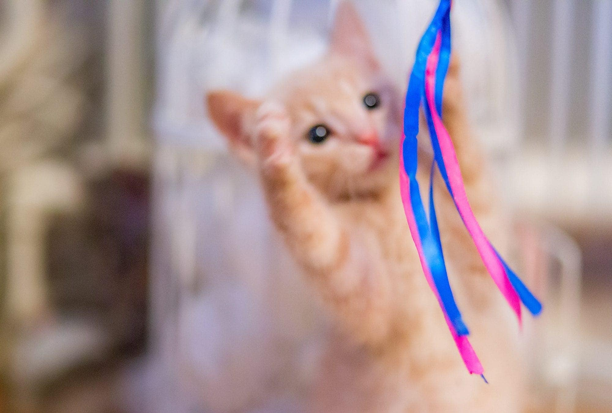 Busig kattunge - Ludwig Sörmlind