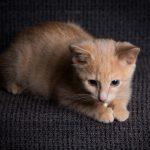 Katten Lillan på en stol - Ludwig Sörmlind