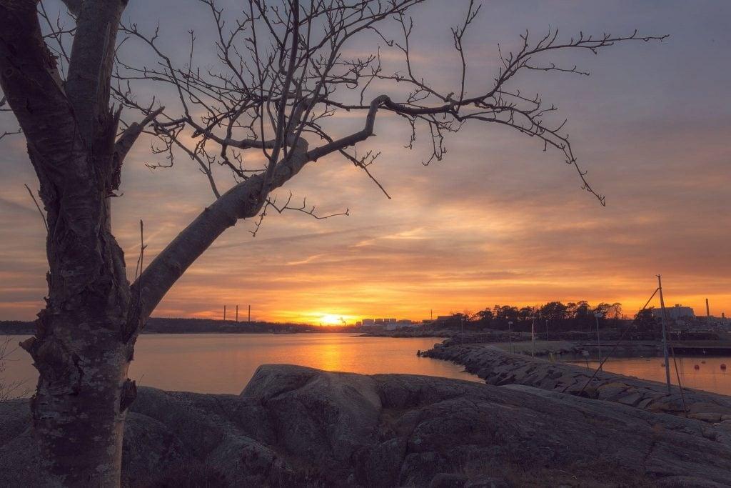 Väggahamnen - Träd med bara grenar i solnedgången - Ludwig Sörmlind
