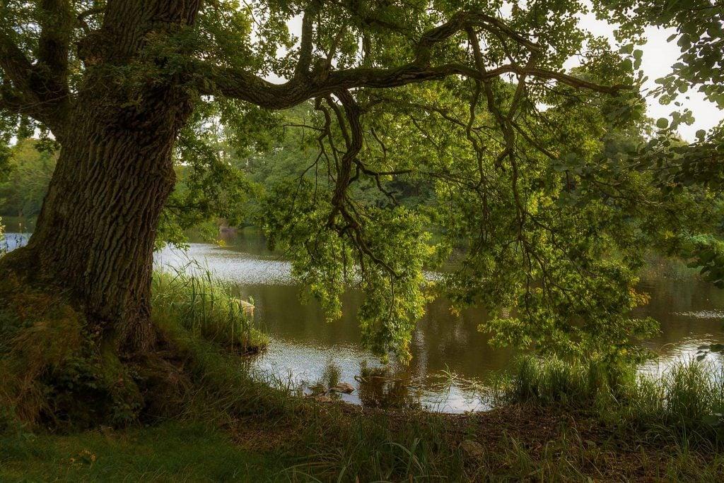 Landskapsfoto vid Mörrumsån - Träd i en glänta