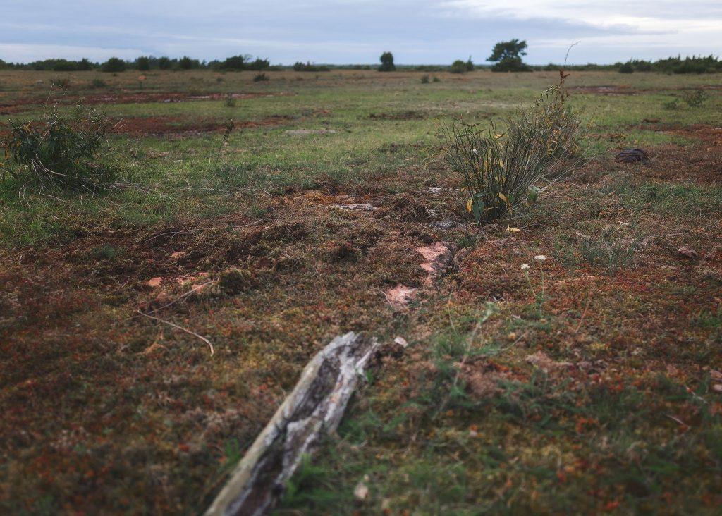 Ölandsstenen tittar fram mellan växtligheten - Ludwig Sörmlind