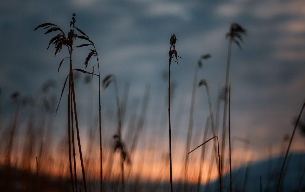Vissen vass framför solen - Ludwig Sörmlind