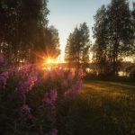 Råstrand - Vacker natur och rogivande omgivningar - Ludwig Sörmlind