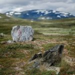 Stekenjokk. Fantastisk natur på kalfjället - Ludwig Sörmlind