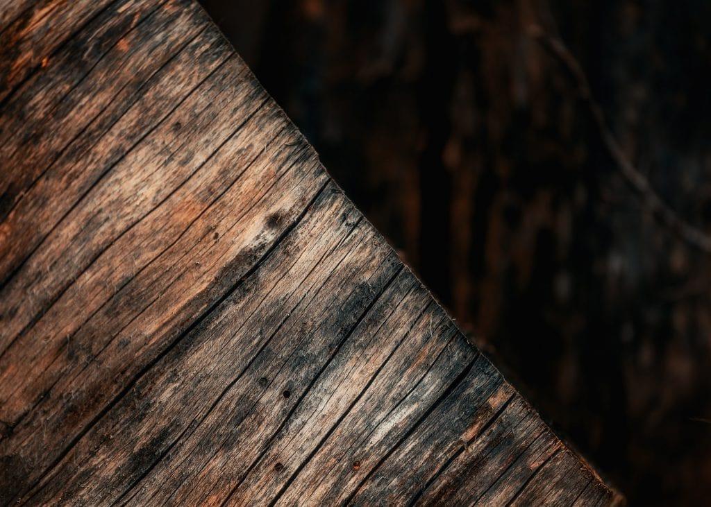 Fallet träd vid Alljungen - Ludwig Sörmlind